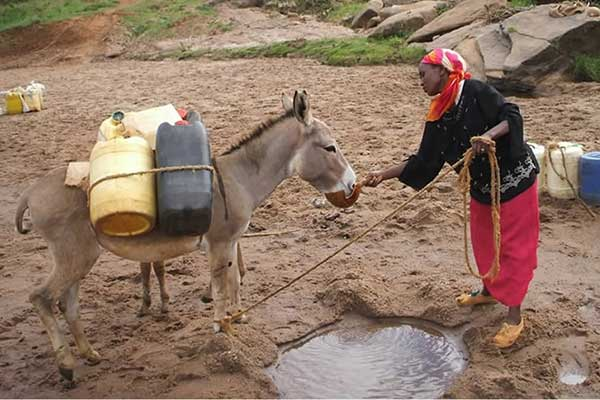 Caring for a donkey